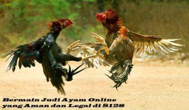 Bermain Judi Ayam Online yang Aman dan Legal di S128